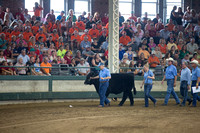 Governor's Steer Show 2014